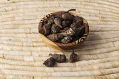 Articulatus Cyperus Gowe Στοκ εικόνες με δικαίωμα ελεύθερης χρήσης