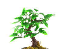 Artifical Bonsai tree Stock Photo