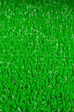 Artifical Grass Background Royalty Free Stock Photos
