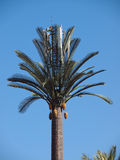 Artifical palm tree. Cellular Phone tower disguised as a  artificial palm tree in Marrakesh Royalty Free Stock Photos