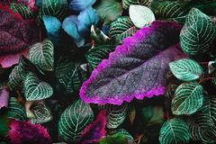Artificial abstract green and purple tropical leaves. Texture, background stock image