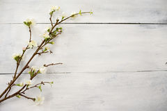 Artificial apple blossom on white wooden Stock Photos