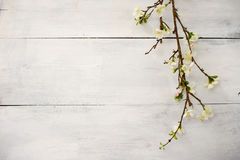 Artificial apple blossom on white wooden Royalty Free Stock Photo
