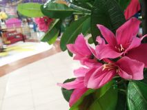 Artificial beautiful pink flower in a mall room royalty free stock photo