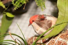 Artificial bird Stock Photos