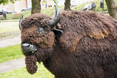 Artificial bison Stock Photo