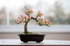 Artificial bonsai tree with flowers royalty free stock photo