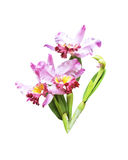 Artificial bouquet orchid flower isolated stock image