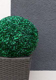 Artificial boxwood ball Stock Images