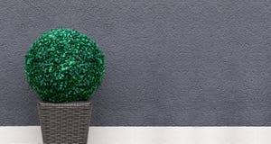 Artificial boxwood ball - panorama Stock Photography