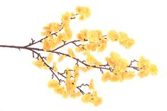 Artificial branch with yellow flowers. Stock Photos