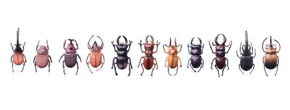 Artificial bugs isolated on white background.  royalty free stock image