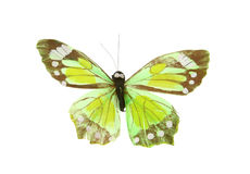 Artificial butterfly Stock Image