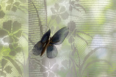 Artificial butterfly on window curtains Royalty Free Stock Photography