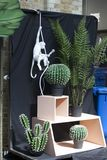 Artificial cactus and fern near the store on the Spitalfields market near Liverpool Street subway. Stock Images