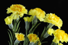 Artificial Carnations Royalty Free Stock Images