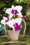 Artificial Cattleya Orchid Flowers Royalty Free Stock Photography