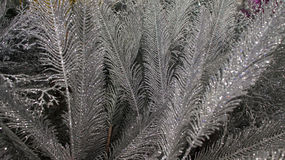 Artificial Christmas Ferns decorations. Close up view of silver artificial Ferns fit for Christmas decorations. This image can also be used for Christmas theme royalty free stock photo
