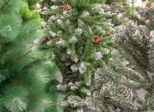 Artificial Christmas trees in the store close-up royalty free stock photos