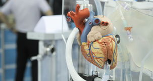 Artificial circulation of blood, man`s artificial heart, model of the heart. Donor heart stock video