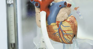Artificial circulation of blood, man`s artificial heart, model of the heart. Donor heart stock footage