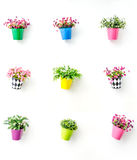 Artificial colorful flowers pots Royalty Free Stock Photo