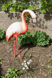 Artificial concrete flamingos Royalty Free Stock Images