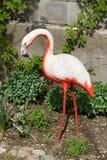 Artificial concrete flamingos Stock Photos