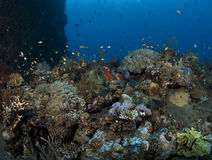 Artificial Coral reef Royalty Free Stock Image
