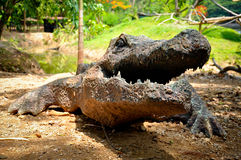 Artificial crocodile Stock Images