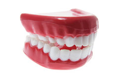 Artificial Dentures Royalty Free Stock Photo