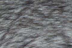 Fur macro Stock Image