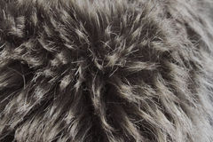 Fur macro Royalty Free Stock Photo