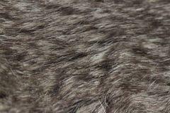 Fur macro Stock Photos