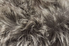 Fur macro Royalty Free Stock Photography
