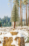 Artificial fir in destroyed forest on the stump Stock Photography