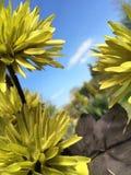 Artificial flower. Artificial green flower Stock Photos