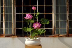 Artificial flower,  lotus flower from clay Royalty Free Stock Image