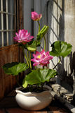 Artificial flower,  lotus flower from clay Stock Images