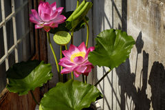 Artificial flower,  lotus flower from clay Stock Photos