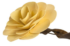 An artificial flower made ​​of wood. In a creamy color Stock Photo