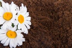 Artificial Flower on Soil Stock Photo