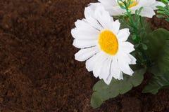 Artificial Flower on Soil Stock Image