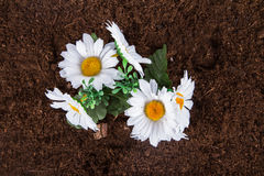 Artificial Flower on Soil Royalty Free Stock Photos