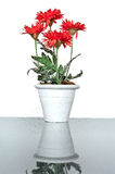 Artificial flower in vase Royalty Free Stock Photography