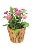 Artificial flower Stock Images