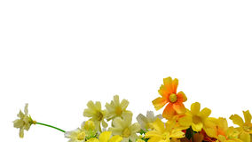 Artificial flowers isolate on white background Stock Photography