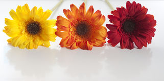 Artificial flowers lined up. Red, orange, yellow artificial flowers lined up stock photography