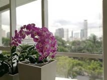 Artificial flowers. Purple orchids, Violet orchids. Orchid is queen of flowers in building Thailand. royalty free stock image