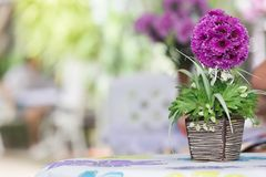 Artificial flowers on the table Royalty Free Stock Photography